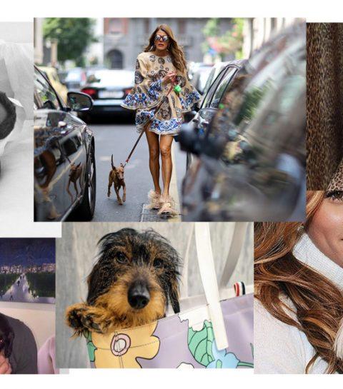 10 mode honden die je moet kennen