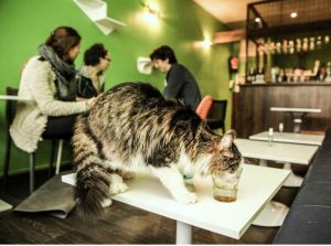le_chat_touille_kattencafé_belgië