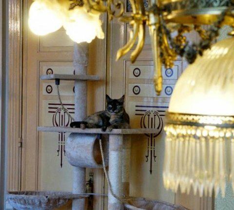 Dit zijn de leukste kattencafés in Brussel
