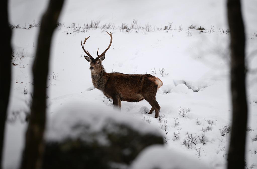 sneeuw belgie wild spotten ardennen tips