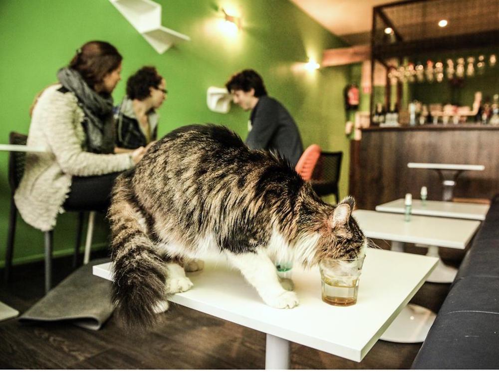 katten cat lovers