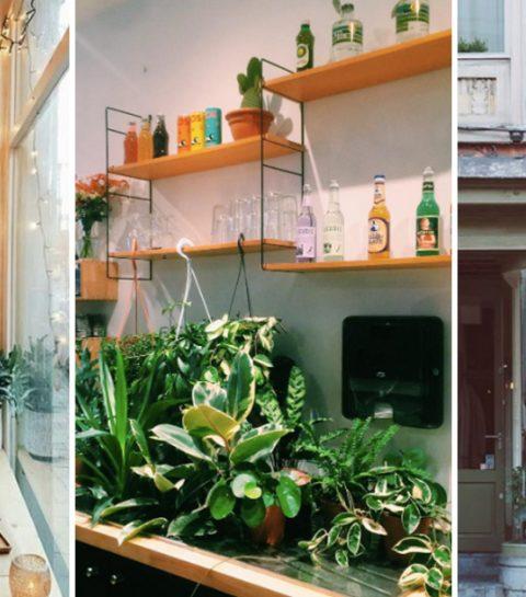 Nieuw in Gent: koffie en kamerplanten bij STEK