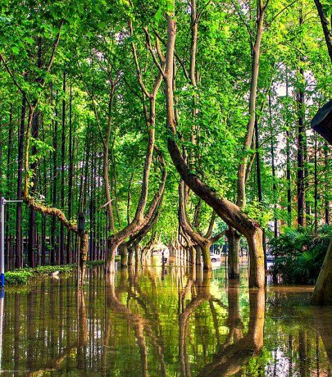 Ecosia: de zoekmachine die bomen plant