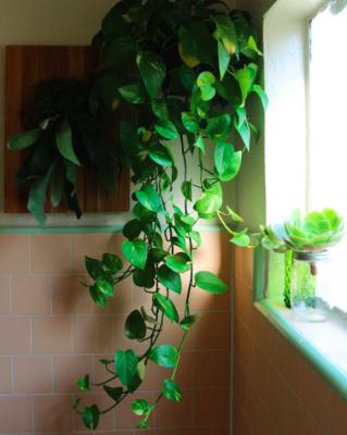 badkamerplant