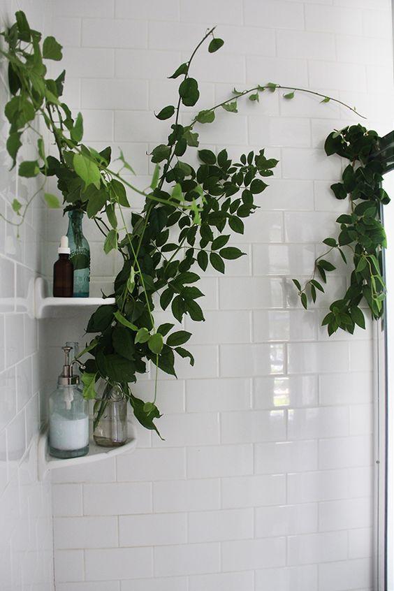 badkamerplanten_groen_reden