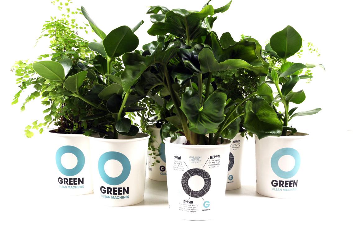 O Green luchtzuiverende planten