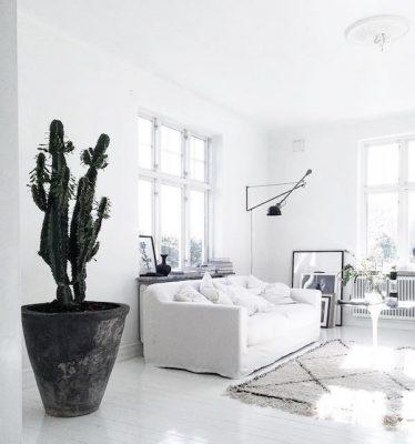 cactussen_inspiratie_planten_pinspiration