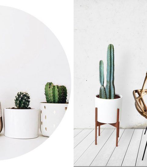 Pinspiration: cactussen in je interieur