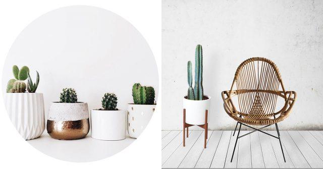 Pinspiration: cactussen in je interieur - ELLE.be