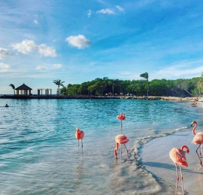 tropisch eiland zwemmen flamingo's Caraïben instagram goals Aruba renaissance resort