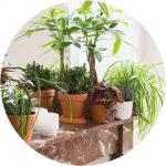world plant day