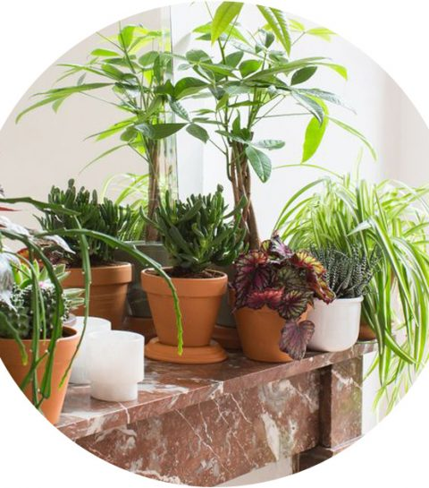 #HappyPlantDay: 5 groene tips voor plantlovers