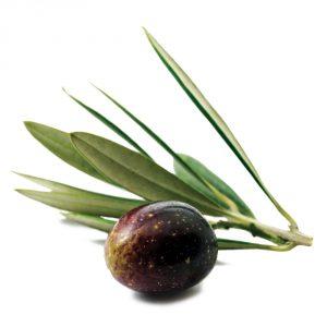 Olive DET