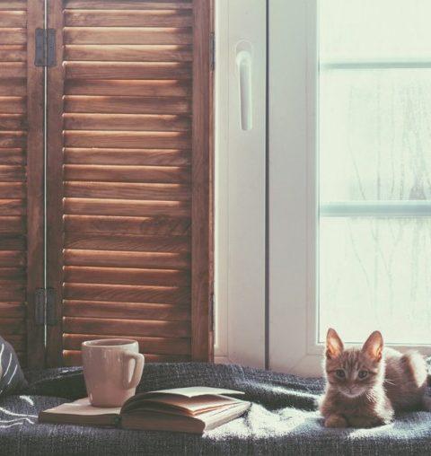Wat moet je met je huisdieren aanvangen als je op vakantie vertrekt?