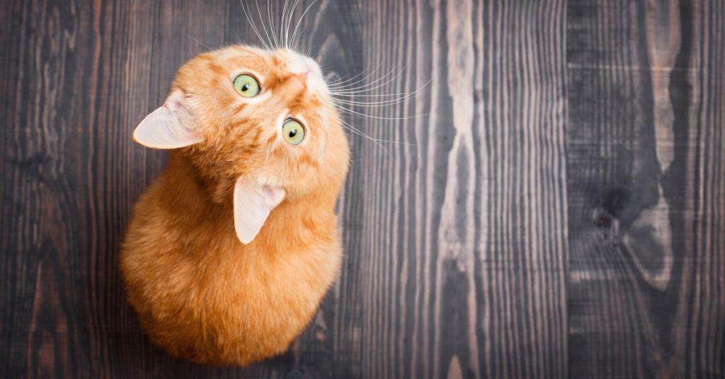 huisdieren als je op vakantie bent kat opvang