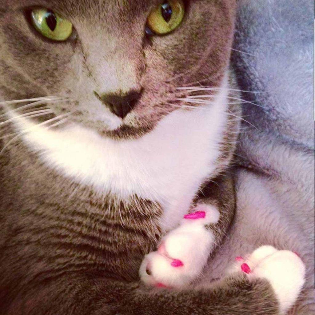 kattennagels_soft_claws_kat