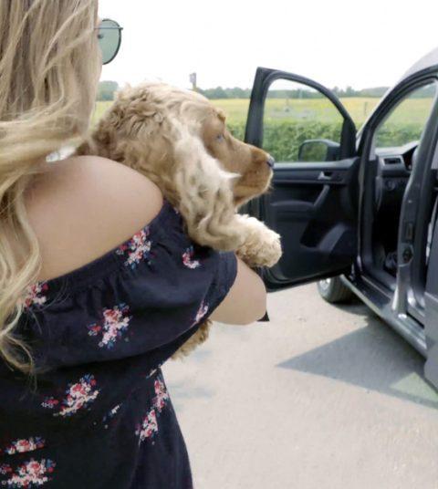 Je hond veilig vastmaken in de wagen, hoe doe je dat?