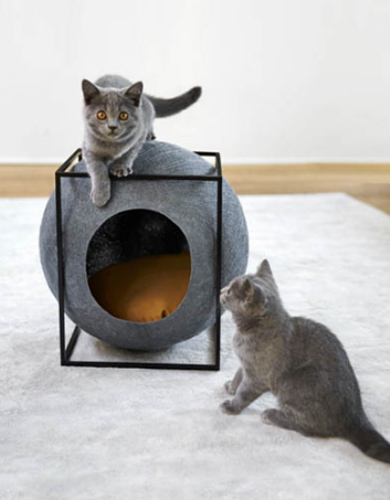 kattenhuisjes_katten_shopping