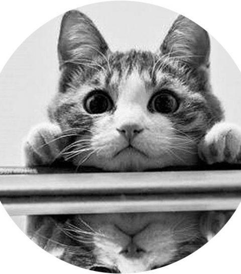 Mi-wauw: deze halsband vertaalt de miauw van je kat