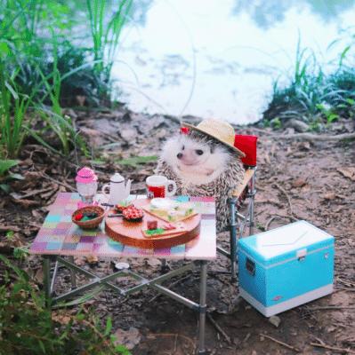 cute_schattig_egel_hedgehog_japan_must_see