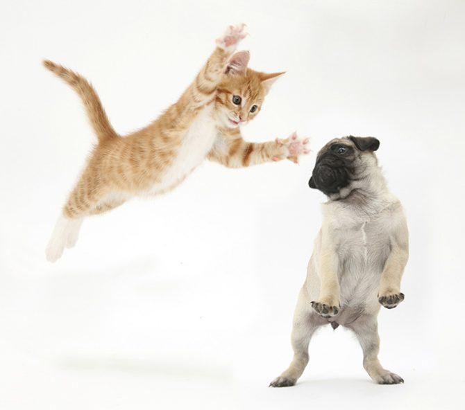 hondencafe kattencafe