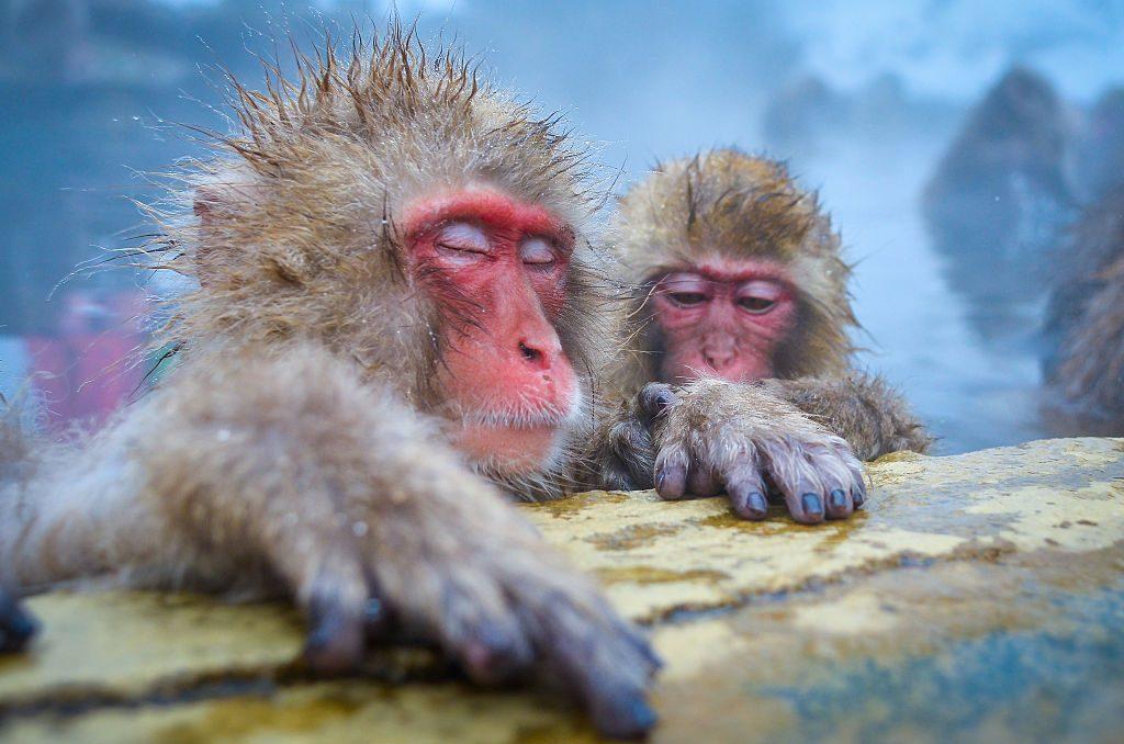 winter, reizen, bestemming, top 10, sneeuw, natuur, citytrip, jigokudani monkey park, japan