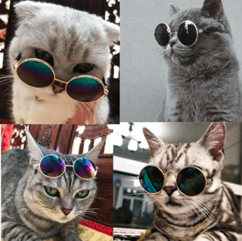 katten_zonnebril_fashion_grappig_zomer_gadget