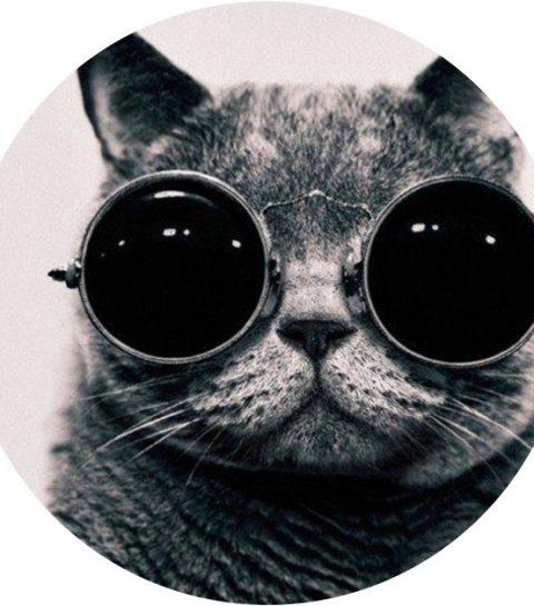 Geniaal: koop een zonnebril voor je kat en steel samen de show!