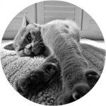 kat_cat_line_eye_wing_beauty_tool