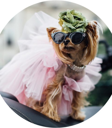 Vergeet it-bags, hier zijn de fashion dogs!
