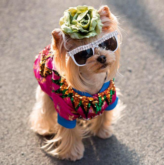 fashion dog dogs hond mode modeweek fashion week frint row doggo puppy cute schattig