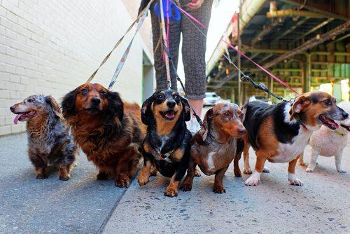 honden wandelen
