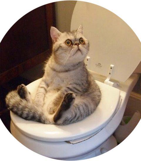 Dankzij dit geniale gadget doet je kat binnenkort haar plasje op het toilet