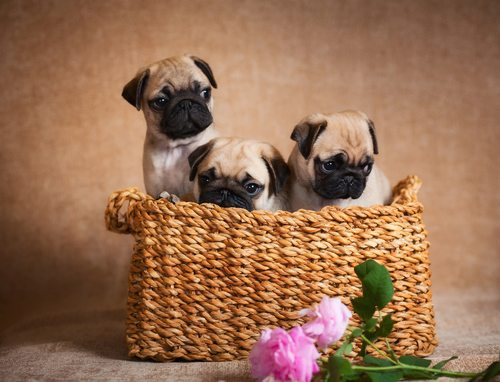 hond, kat, café, dieren, hondenliefhebber, wetteren, dierenliefhebber, bucket list