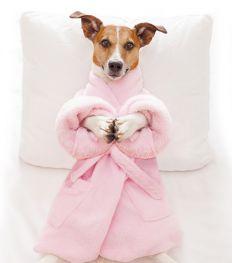 Gaan jij en je hond binnenkort samen naar de spa?
