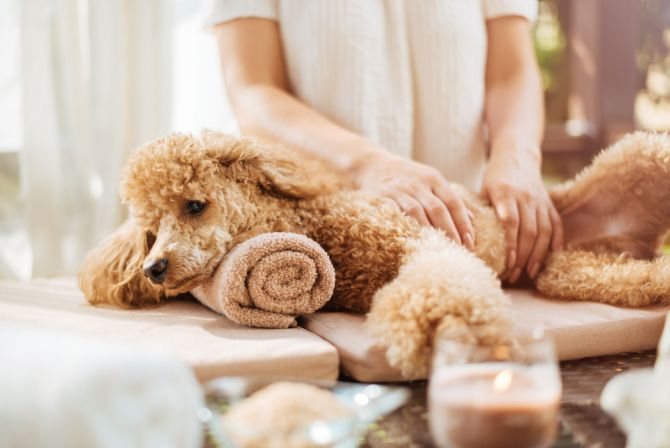 massage hond spa wellness