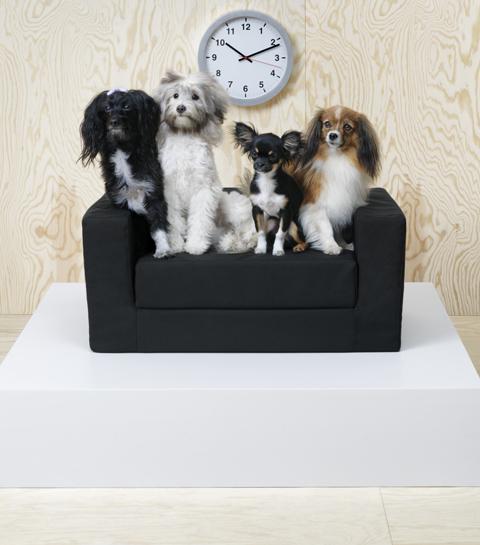 Binnenkort kunnen ook je kat en hond shoppen bij Ikea