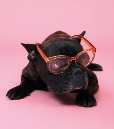 accessoire trend trends zomer shopping fashion millenial pink roze bril frenchie french bulldog hond puppy