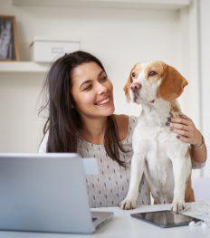 hond, kantoor, werk, huisdier