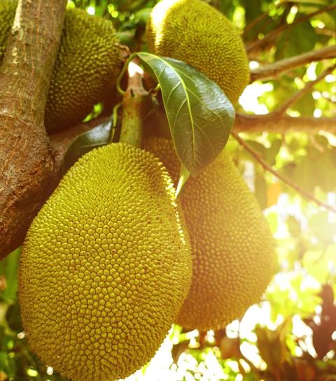 Veggie: Dit exotische fruit is een ideale vleesvervanger