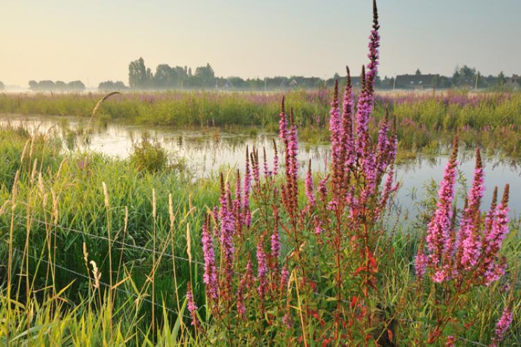 gentbrugse meersen natuur looproutes in Gent