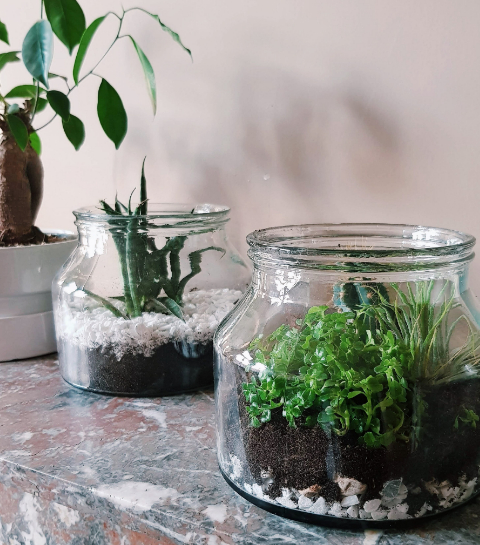 DIY: zo maak je een plantenterrarium