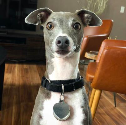 instagram, hond, account, grappig, lief, leuk, schattig