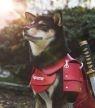 De 25 allerleukste hondenaccounts van Instagram