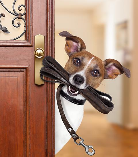 Zo vind je de perfecte petsitter voor jouw huisdier