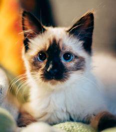 Te cute: De 10 allerleukste kattenaccounts op Instagram