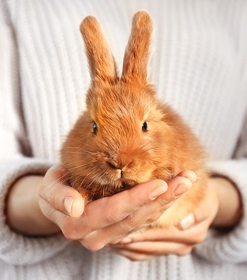 Wat kan je dit weekend ondernemen tegen dierenproeven in de cosmetica industrie?