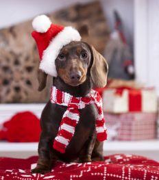Kerstshopping: de allerleukste cadeautjes voor je huisdier
