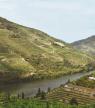 Volg de wijngids: Proeverij in de Dourovallei