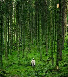 Op zoek naar rust? Neem eens een bosbad